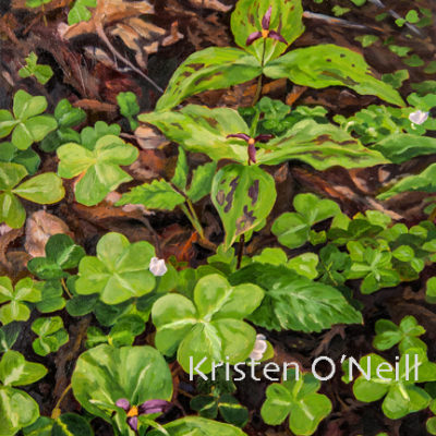 Painting of redwood sorrel and trillium blooming
